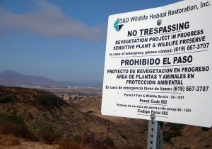 The California Department of Transportation has already conducted vernal pool restoration on a portion of their property in Dennery Canyon but restoration of maritime succulent scrub is needed on the remainder of this and other conserved properties.