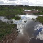 Otay Mesa Vernal Pool Habitat Restoration