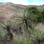 Dennery Canyon plants